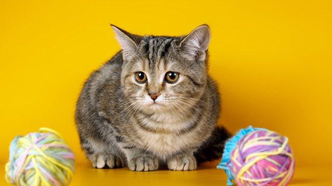Котенок сидит возле клубков пряжи