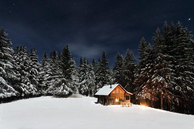 Деревянный дом в окружении хвойного леса