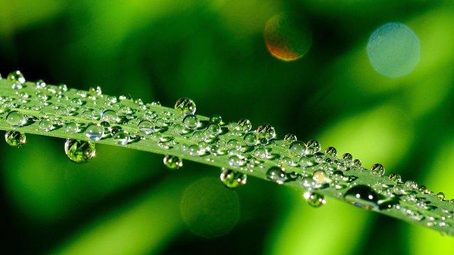 Капли воды на зеленом длинном листе