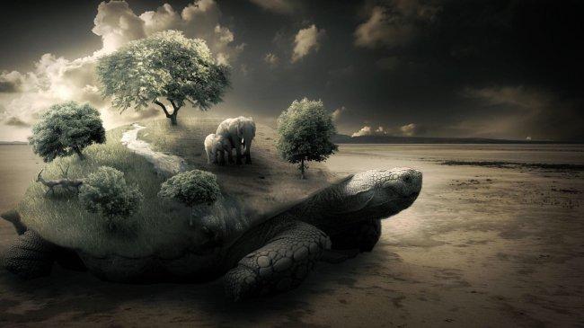 Маленький мир на панцире гигантской черепахи