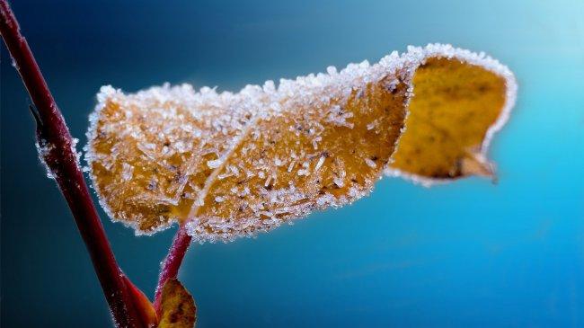 Замерзший лист