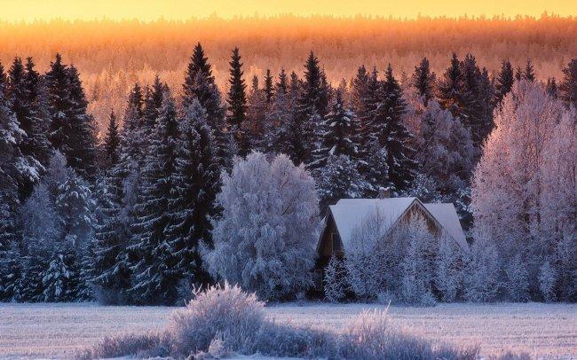 Дом в лесу