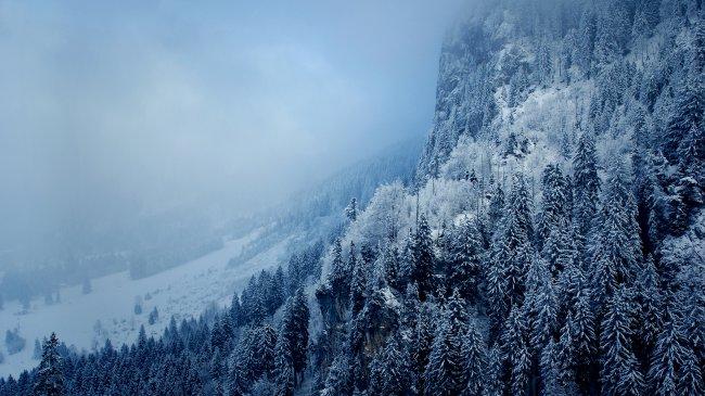 Заснеженные горные леса под облаками