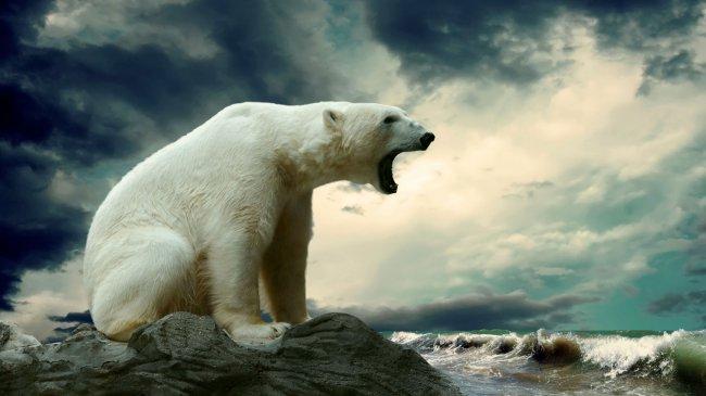 Рычащий белый медведь