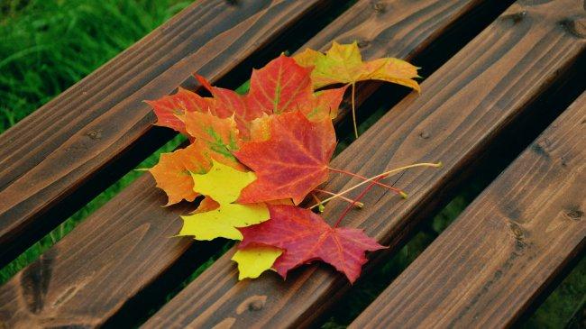 Букет осенних листьев лежит на лавочке