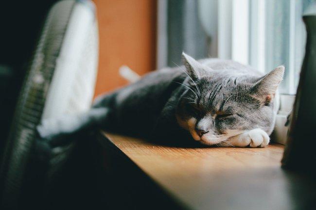 Серый кот спит на подоконнике