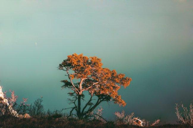 Дерево на высоком склоне горы на фоне моря