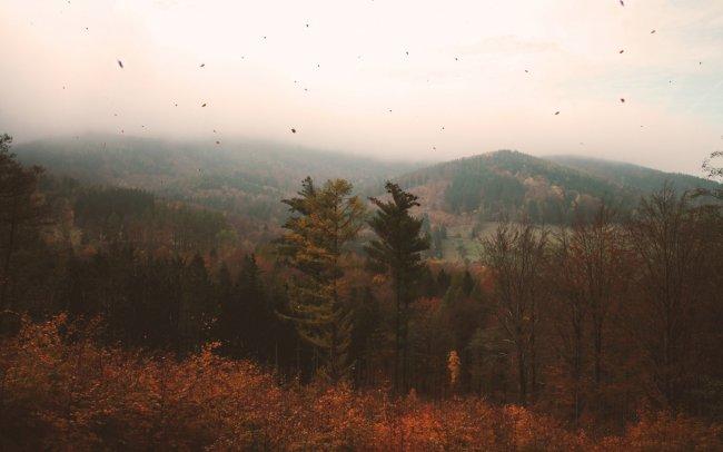 Туманная дымка над осенним лесом