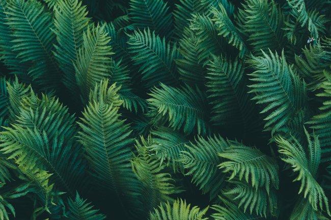 Листья папоротников
