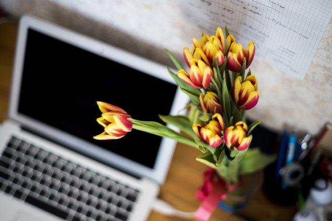 Красно-желтые тюльпаны