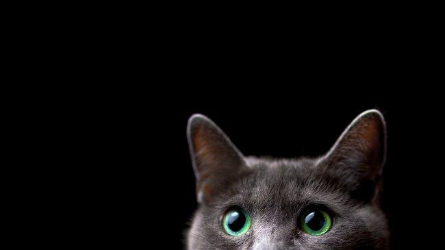 Выглядывающий кот