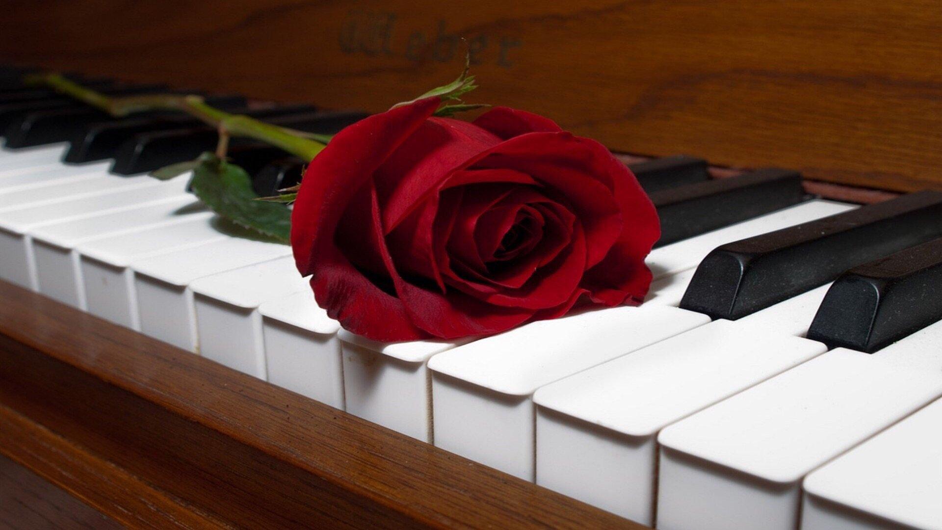 зевак отсекала картинка розы и клавиши самый хороший