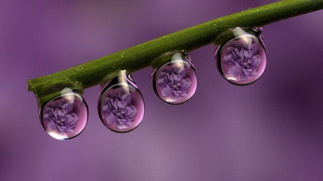 Капли дождя на стебле
