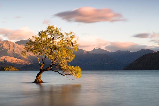 Новая Зеландия, Ванака, Отаго