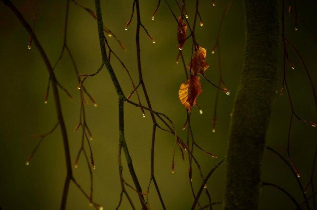 Осенняя листва после дождя