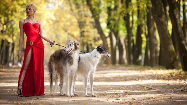 Блондинка в красном платье выгуливает собак