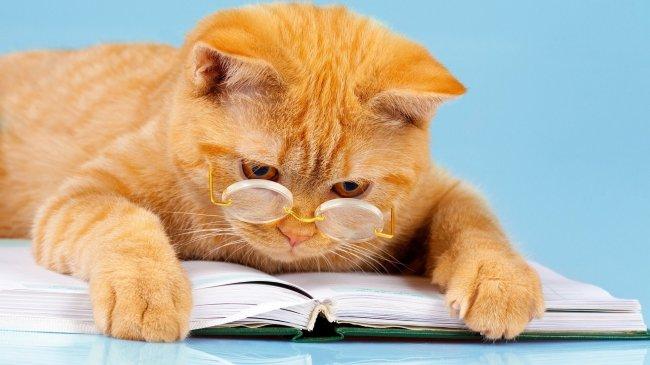 Рыжий кот в очках читает книгу