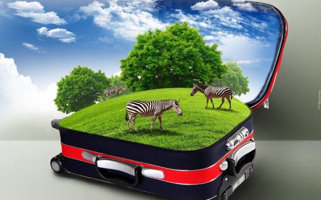 Зебры гуляют по полю