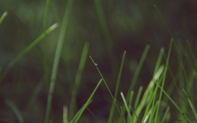Жук на травинке