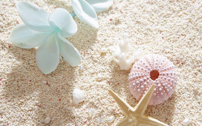 Ракушки и морские звезды на пляже