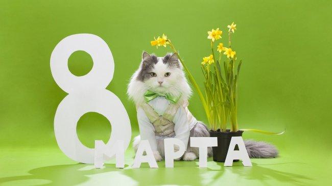 Кот во фраке возле горшка с цветами