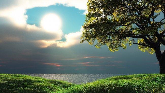 Дерево на фоне пасмурного неба
