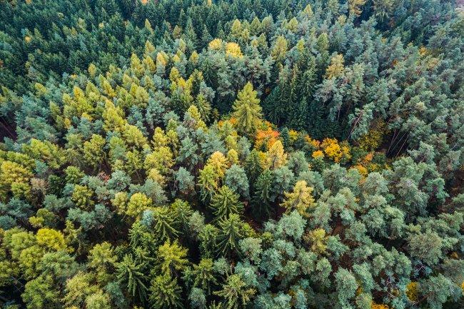 Осенний лес с высоты