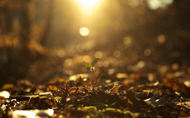 Сквозь опавшую листву пробивается росток