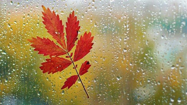 Осенний лист на дождливом стекле