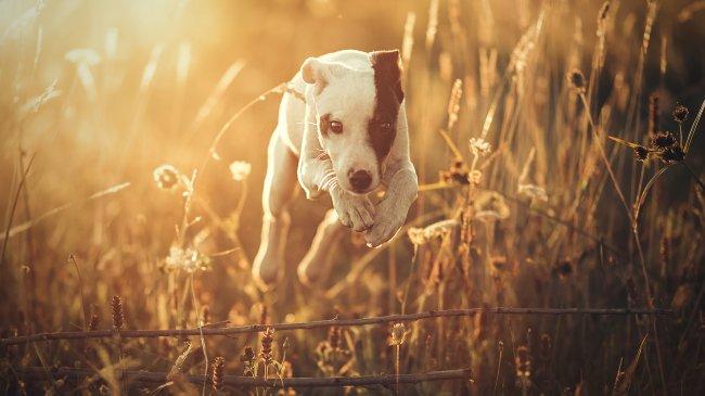 Щенок среди травы
