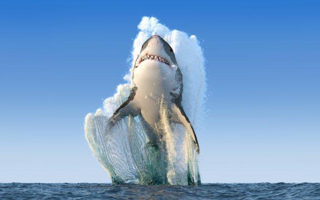 Гигантскую белая акула, выпрыгивает из океана