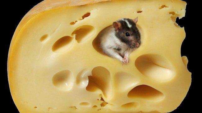 Мышь в сыре