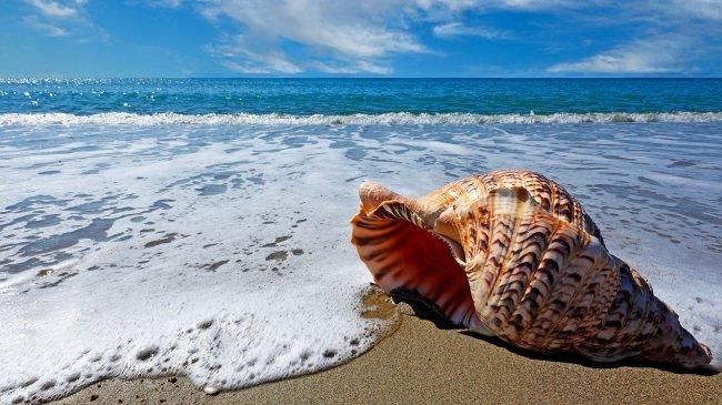 Большая ракушка лежит на берегу