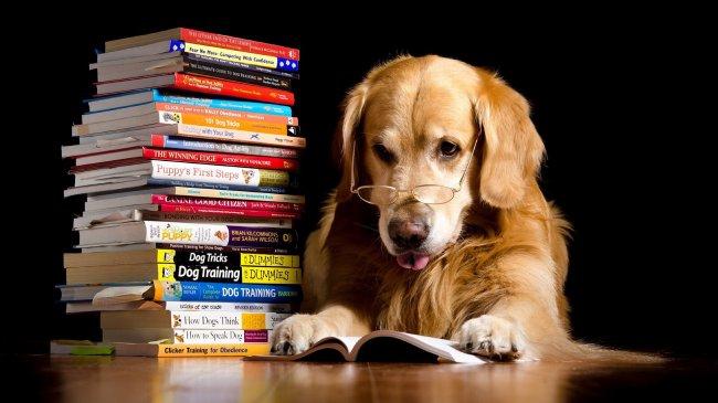 Лабрадор в очках читает книгу