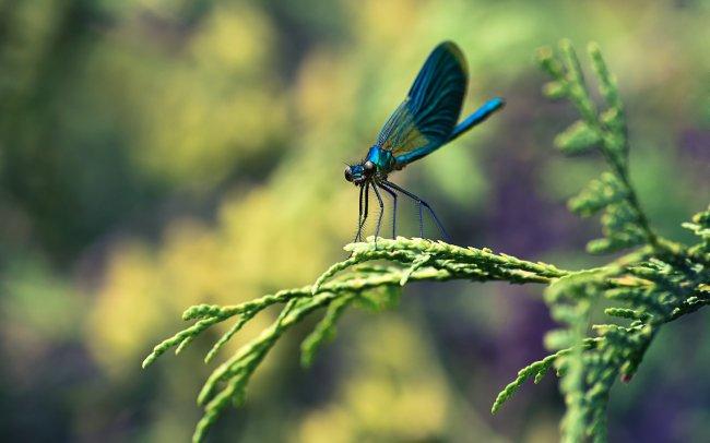 Синяя стрекоза на зеленой веткe