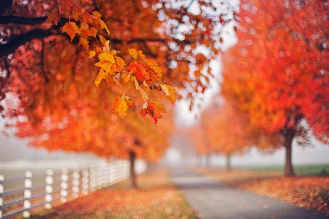 Осенние листья деревьев