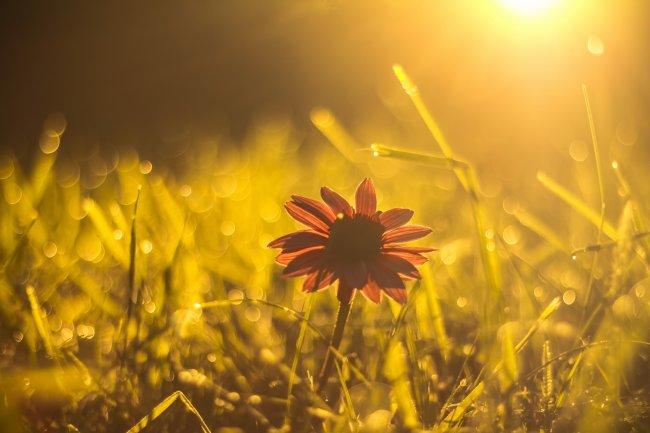 Цветок в траве на рассвете