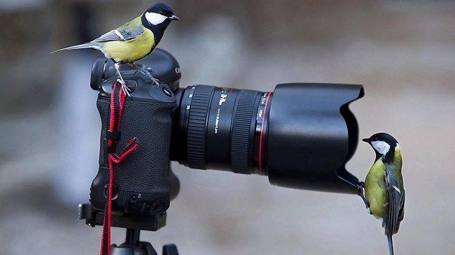 Две синички на фотоаппарате