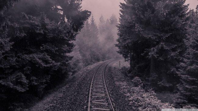 Железная дорога идущая через лес
