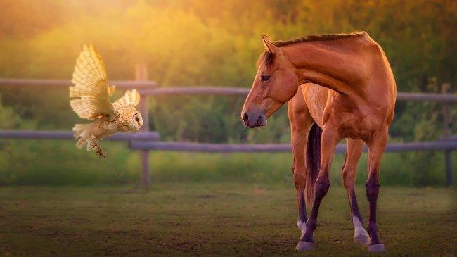 Лошадь смотрит на летящую сову