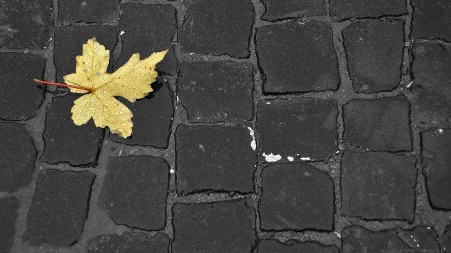 Осенний лист на мостовой