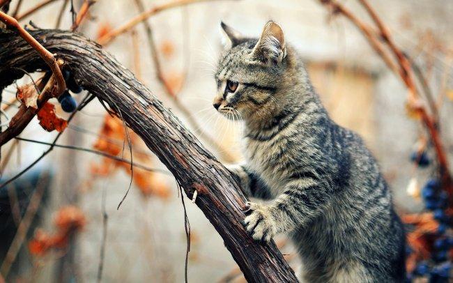 Кот сидит на засохшей виноградной ветке