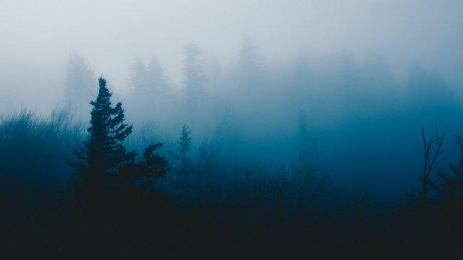 Бледное утро фото Коула Кистера