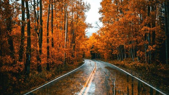 Осеняя дорога после дождя сквозь лес