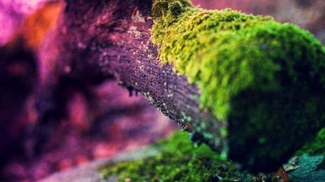Мох на старом стволе дерева