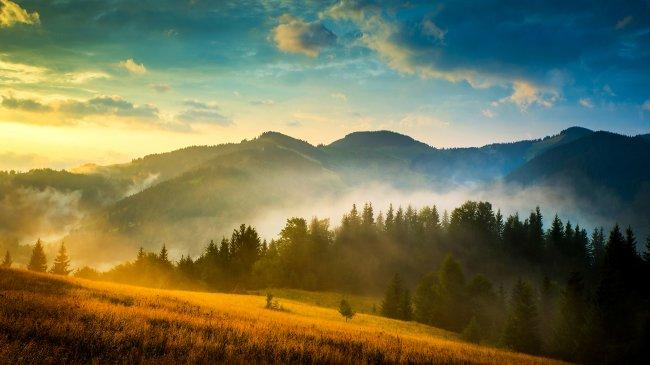 Утрений хвойный лес на фоне гор