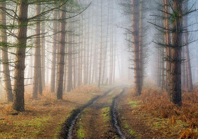 Проселочная дорога в хвойном лесу