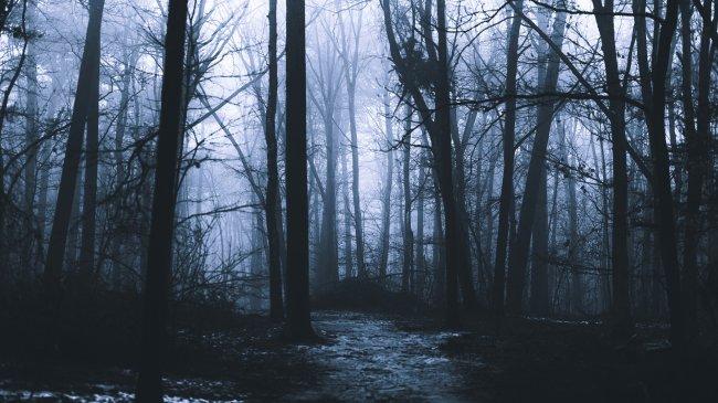 Утренний туманный лес