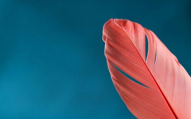 Красное перо