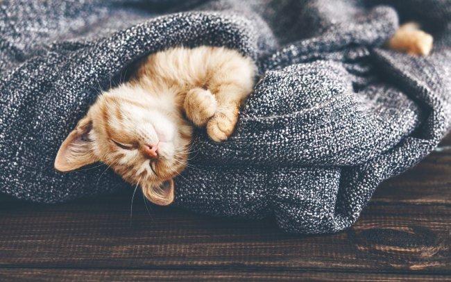 Спящий рыжий котенок, завернутый в шарф
